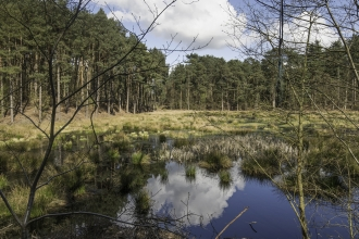 Doolittle Pool, Delamere c. Richard Gabb