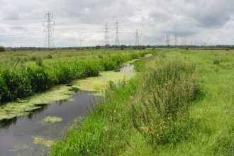Ditch at Gowy Meadows