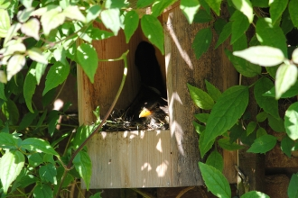 Nest box c. Amy Lewis