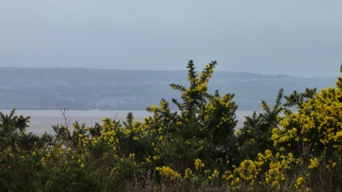 Cleaver Heath and Dee Estuary c. Claire Huxley