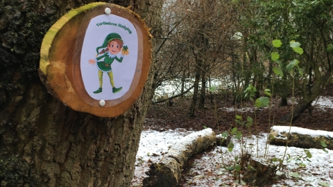Black Firs Christmas Trail