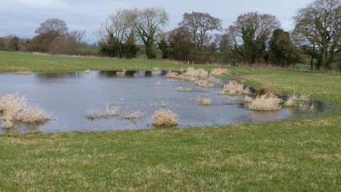 Pond at Bickley Hall Farm c. Claire Huxley