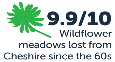 9.9/10 wildflower meadows lost for Cheshire since the 60s