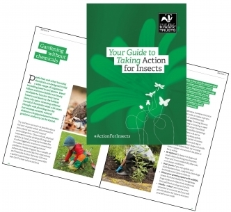 Action for Insects Guide