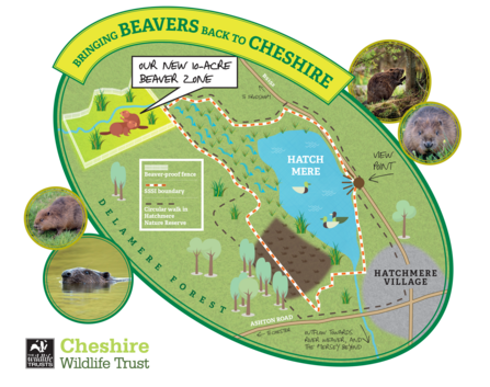 Hatchmere beaver map